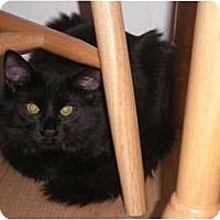 Adopt A Pet :: Vader - Warren, MI