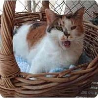 Adopt A Pet :: Pooka - El Cajon, CA
