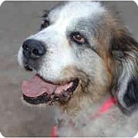 Adopt A Pet :: Sienna - Scottsdale, AZ
