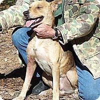 Adopt A Pet :: Si - Little River, SC