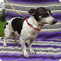Adopt A Pet :: Marvin - Carmel, IN