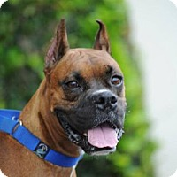 Adopt A Pet :: Bon Jovi - Alameda, CA
