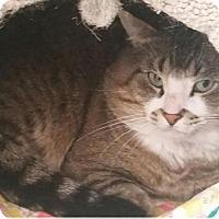 Adopt A Pet :: Lindor - Edmonton, AB