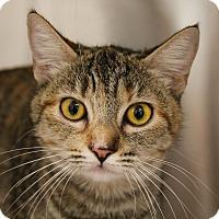 Adopt A Pet :: Venice - Mission Viejo, CA