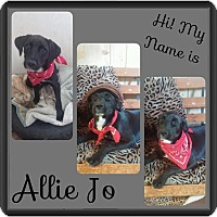 Adopt A Pet :: Allie Jo in CT - Manchester, CT