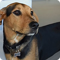 Adopt A Pet :: *Lexi - PENDING - Westport, CT