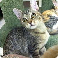 Adopt A Pet :: Cilla - Trevose, PA