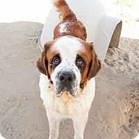 Adopt A Pet :: Harley # 2 - Sparks, NV