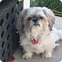 Adopt A Pet :: DAKOTA - Eden Prairie, MN