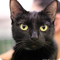 Adopt A Pet :: Shandy - Bedford, VA