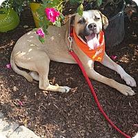 Adopt A Pet :: Darby - joliet, IL