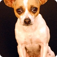 Adopt A Pet :: Chrissy - Newland, NC