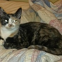 Adopt A Pet :: Scarlett - Carlisle, PA