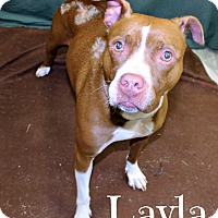 Adopt A Pet :: Layla - Melbourne, KY