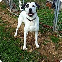 Adopt A Pet :: Maisey - Fairmont, WV