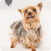 Adopt A Pet :: Tina Turner - Inglewood, CA