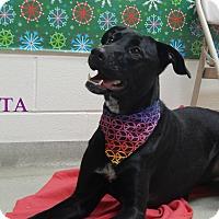 Adopt A Pet :: Rita - Bucyrus, OH