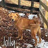 Adopt A Pet :: Jolly - Milton, GA