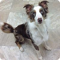 Adopt A Pet :: Jake - Urbana, OH