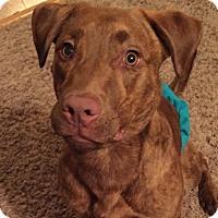 Adopt A Pet :: Cedar - Cedar Rapids, IA