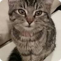 Adopt A Pet :: Purrific - Glendale, AZ