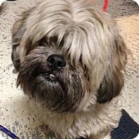 Adopt A Pet :: Catalina - Freeport, NY