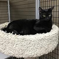 Adopt A Pet :: Tinker - Stockton, CA
