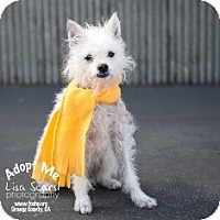 Adopt A Pet :: Chester - Tustin, CA
