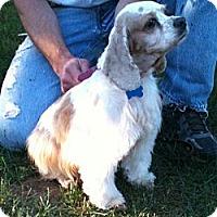Adopt A Pet :: MISTI - Tacoma, WA