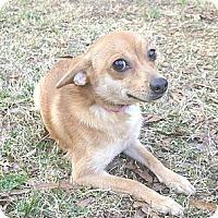 Adopt A Pet :: Gigi - Mocksville, NC