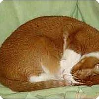 Adopt A Pet :: Boone - Alexandria, VA
