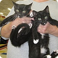 Adopt A Pet :: MATCHING PAIR! - Dallas, TX
