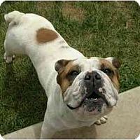 Adopt A Pet :: Sancho & Khuyana - San Diego, CA