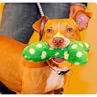 Adopt A Pet :: Sunny - Grafton, OH