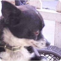 Adopt A Pet :: Roger - Sun Valley, CA