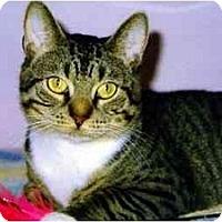 Adopt A Pet :: Spot - Medway, MA
