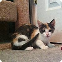 Adopt A Pet :: Little Bit/Leigha - Monroe, GA