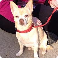 Adopt A Pet :: *Courtesy Post* George Bailey - Romeoville, IL
