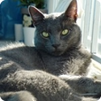 Adopt A Pet :: James Hook - Vancouver, BC