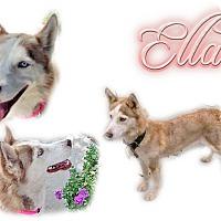 Adopt A Pet :: Ella - Seminole, FL
