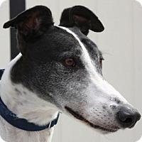 Adopt A Pet :: Bleeker - Rancho Santa Margarita, CA