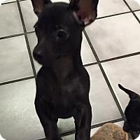 Adopt A Pet :: Sunflower - Las Vegas, NV