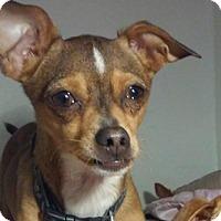 Adopt A Pet :: Crash - San Francisco, CA