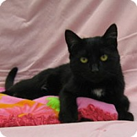 Adopt A Pet :: Blissa - Redwood Falls, MN