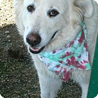 Adopt A Pet :: SUGAR - Pilot Point, TX