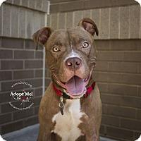 Adopt A Pet :: Ren - Mooresville, NC