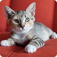 Adopt A Pet :: Finch - Brooklyn, NY