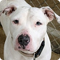 Adopt A Pet :: Petunia - Fort Madison, IA
