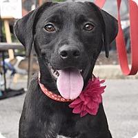 Adopt A Pet :: Marie - Huntsville, AL