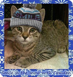Domestic Shorthair Kitten for adoption in East Brunswick, New Jersey - Camden